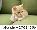 猫 27624269