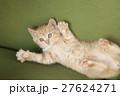 猫 27624271