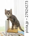 猫 27624273