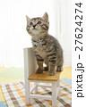 猫 27624274