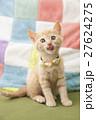猫 27624275