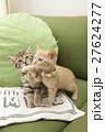 猫 27624277
