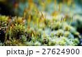 苔 植物 クローズアップの写真 27624900