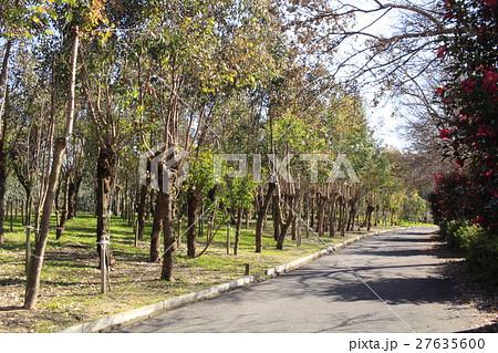 ユーカリの森6 27635600