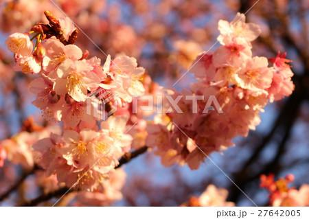 梅の花 27642005