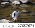 アオサギ 鳥 野鳥の写真 27657674