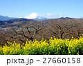 菜の花の風景・吾妻山 27660158