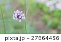 花 野原 運動場の写真 27664456