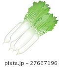 野菜 イラスト 大根 27667196