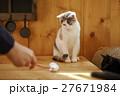 猫カフェ 27671984