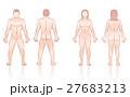 Human Body Man Woman Front Back 27683213