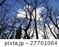 冬枯れの森 27701064