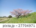 桜 ソメイヨシノ 花の写真 27704971