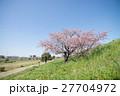 桜 ソメイヨシノ 花の写真 27704972