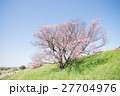 桜 ソメイヨシノ 花の写真 27704976