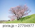 桜 ソメイヨシノ 花の写真 27704977