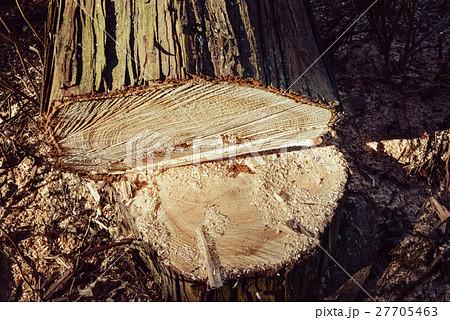 伐採 27705463