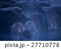 温泉 サル ニホンザルの写真 27710778