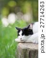 切り株の上で眠るハチワレ猫 27714263