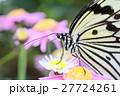花にとまる蝶 27724261