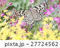 花畑の蝶 27724562