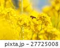 菜の花 27725008
