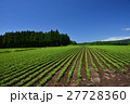 北海道 風景 畑の写真 27728360