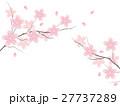 桜 花 花びらのイラスト 27737289