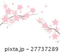 桜柄 27737289