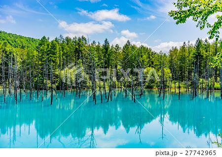 【北海道】美瑛の青い池 27742965