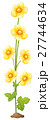 Yellow flowers on white background 27744634