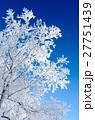 青空と樹氷 27751439