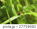 てんとう虫 天道虫 昆虫の写真 27759082