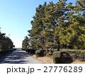 稲毛海岸入り口の黒松の街路樹 27776289