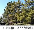 稲毛海岸入り口の黒松の街路樹 27776561