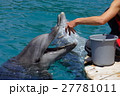 Feeding of dolphins in aquarium 27781011