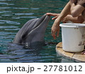 Feeding of dolphins in aquarium 27781012