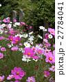 般若寺の秋桜 27784041