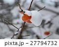 柿 雪 果実の写真 27794732
