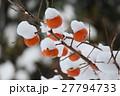 柿 雪 果実の写真 27794733