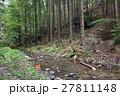 森林 林 森の写真 27811148