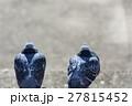 鳩 ハト 野鳥の写真 27815452