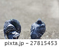 鳩 ハト 野鳥の写真 27815453