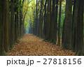 秋 あき 秋のの写真 27818156