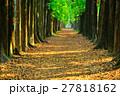 秋 あき 秋のの写真 27818162