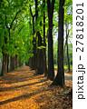 跡 林 森の写真 27818201