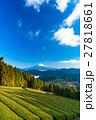 【静岡県】富士山と茶畑 27818661