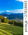 【静岡県】富士山と茶畑 27818665