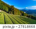 富士山 富士 畑の写真 27818668