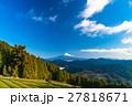 【静岡県】富士山と茶畑 27818671